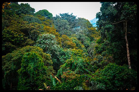 6833717742_edbb6798c5_o Jardin Botánico del Quindío - Armenia, Colombia Colombia Zona Cafetera  Zona Cafetera Quindio Nature Mariposario Guadua Garden Colombia Butterfly Botanical Bamboo