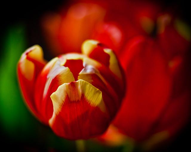 Spring-5885.jpg