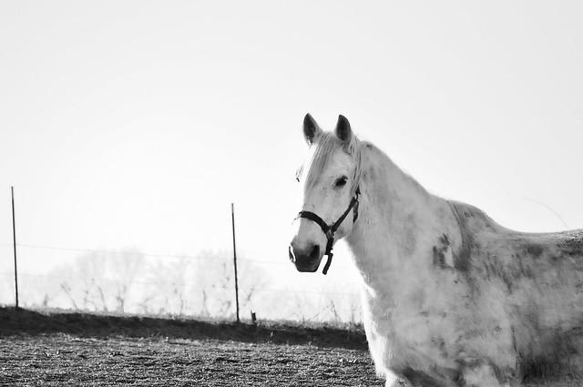 farmgirl-0046.jpg