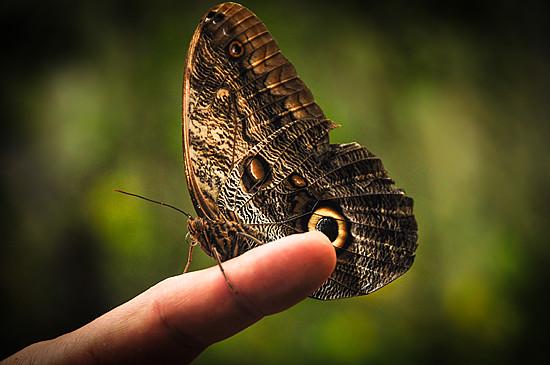 6979846869_ec8f5e63eb_z Jardin Botánico del Quindío - Armenia, Colombia Colombia Zona Cafetera  Zona Cafetera Quindio Nature Mariposario Guadua Garden Colombia Butterfly Botanical Bamboo