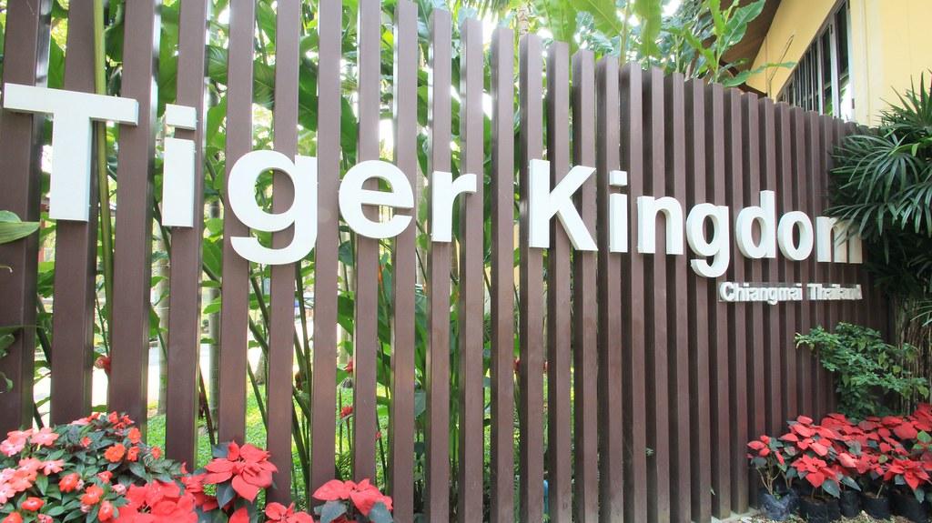 Tiger Kingdom- Chiang Mai, Thailand