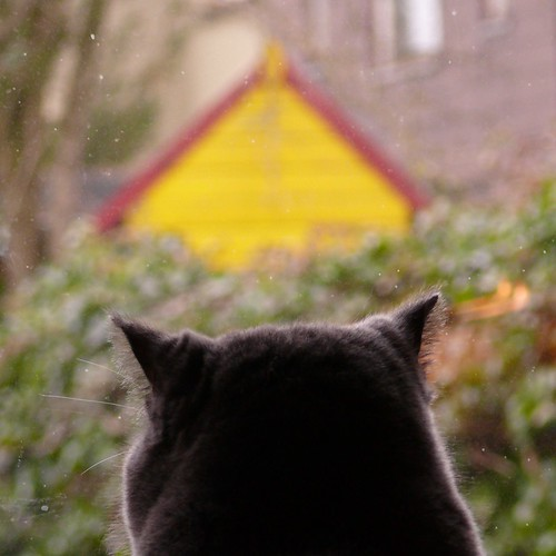 cat, thinking