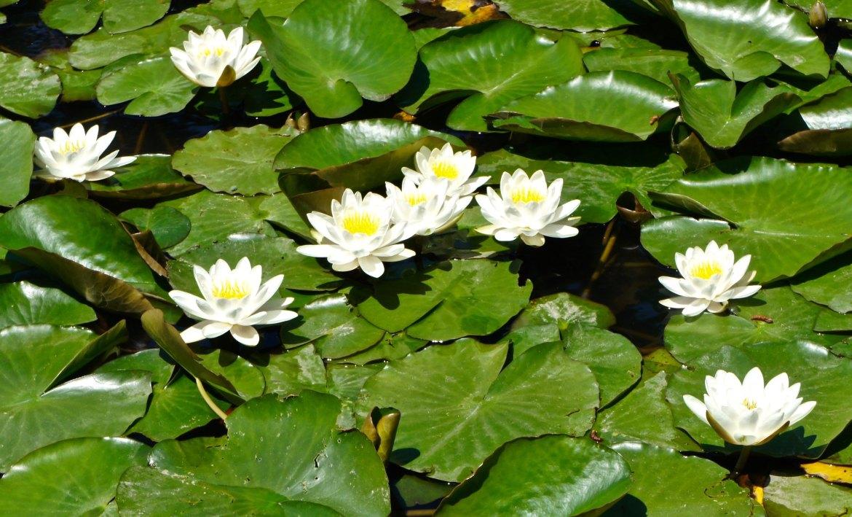 Sankein Gardens