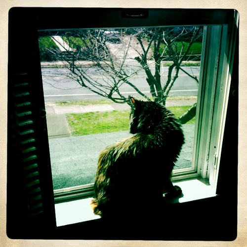 spring - open windows