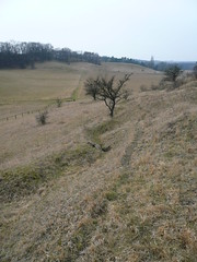 Trenches on the Seelow heights