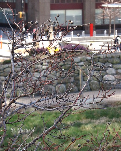 Irish Hunger Memorial, NYC (7)