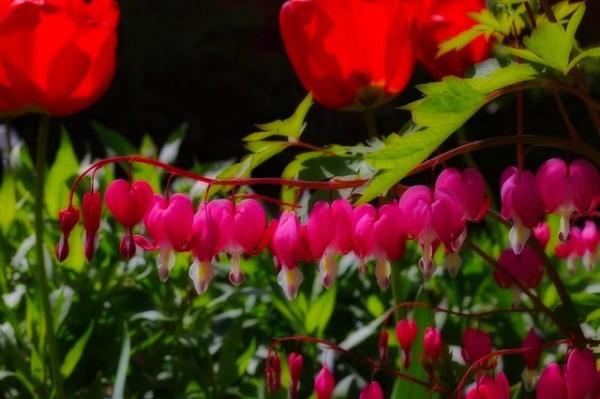 fleurs-inconnues