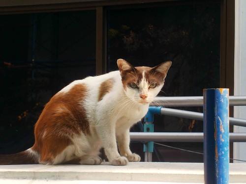 Maha Purettharam Cat