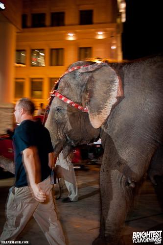 12-03_elephants119-131