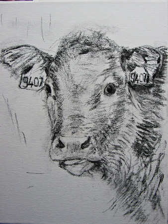 Calf, drawing