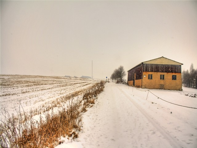 Feldweg_Winter