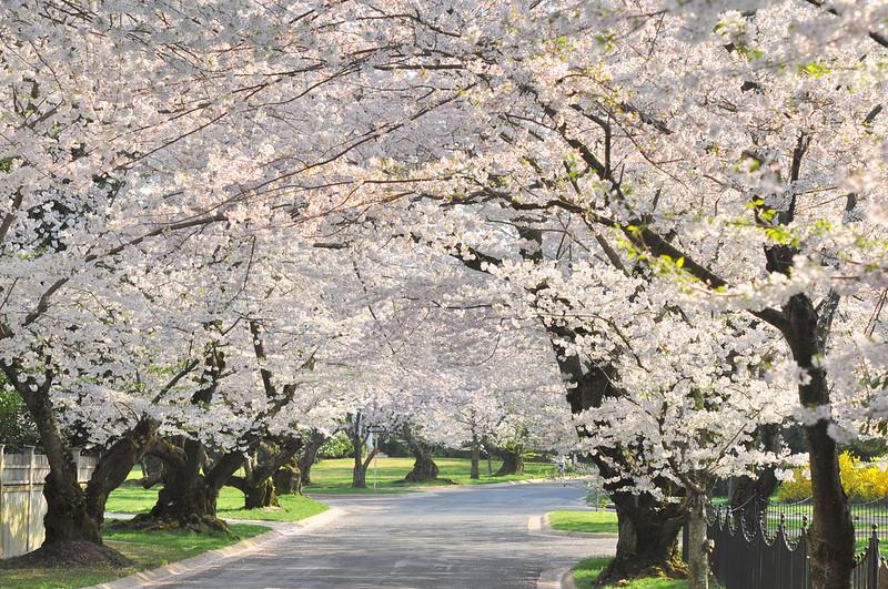 Blossom Land