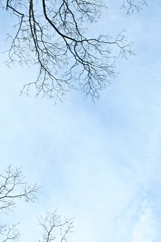 Branches On A Blue Sky