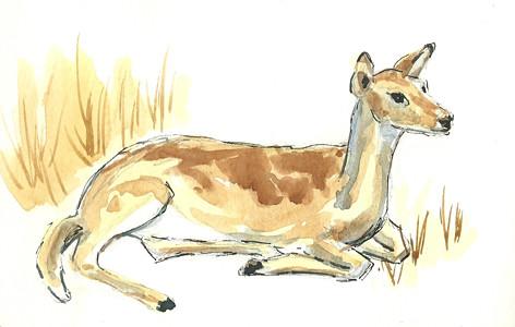 20120225_deer2