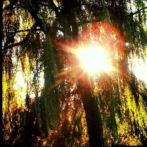 Instagram 28 Day Photo Challenge Day 23- Sunflare
