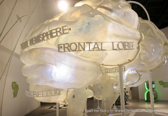 The Mind Museum @ BGC-22.jpg