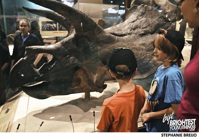 Smithsonian Dinosaur Exhibit Photos Brightest Young Things Stephanie Breijo4