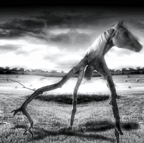 """Wooden Tripod Horse"""