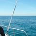 Volunteer and the vast sea