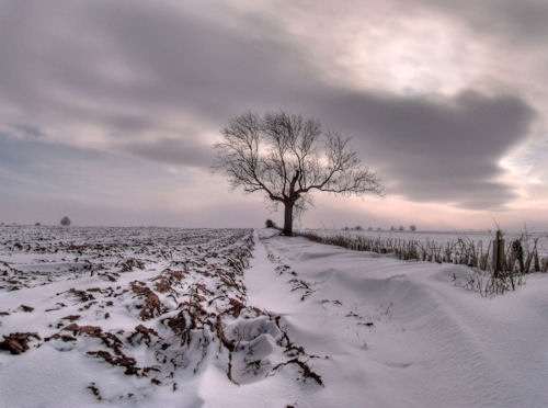 Cold and Lonely by Sarah L Couzens