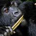 UN FAO/Special Request--Rwanda 12-15 November, 2011