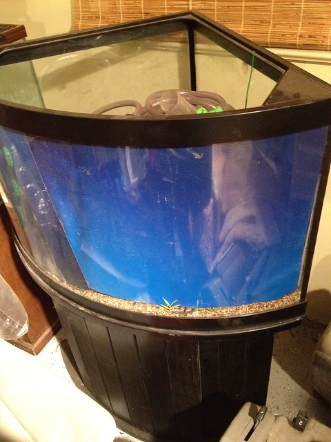 Gallon Aquarium 240 Square