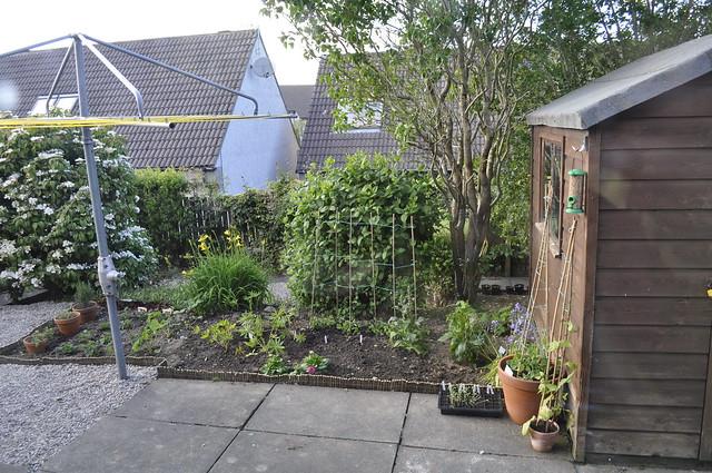 2012-06-02 Garden 001