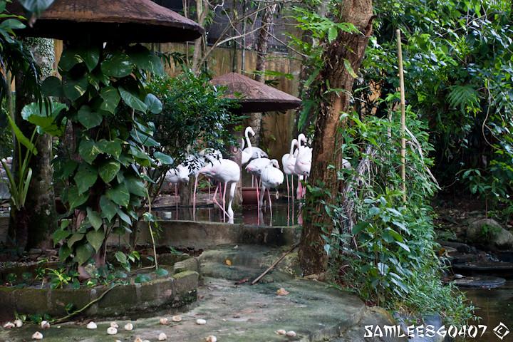 20120407 2012.04.06 Bird Paradise & Wildlfe Park @ Langkawi-10