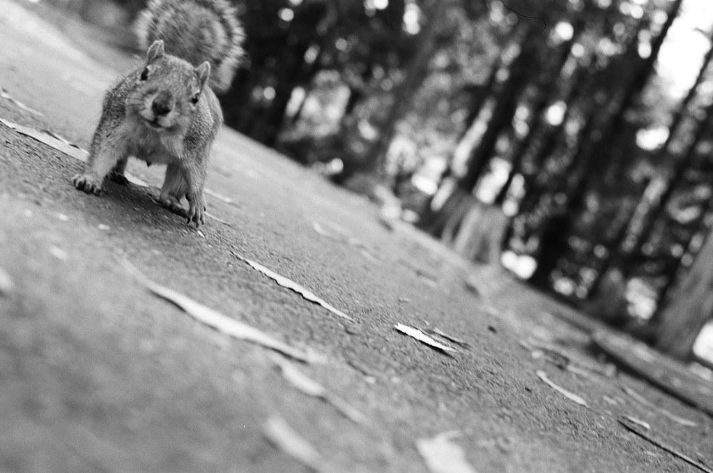 Campus Squirrel