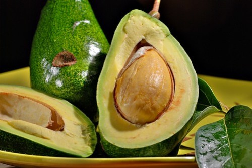 avocado tree song (explore)