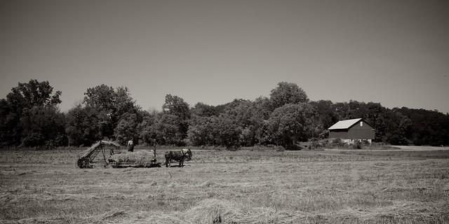 Making Hay 7