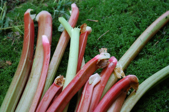 Rhubarb orange compote