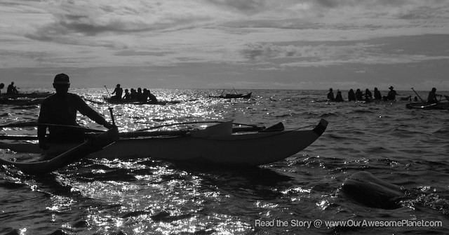 Oslob Whale Watching-29.jpg