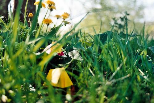 Under the dandelions