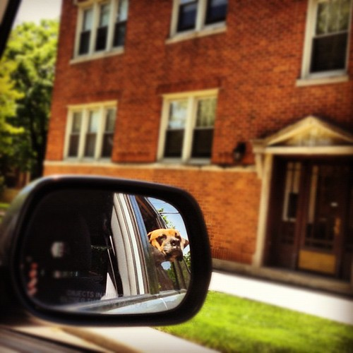 Dogs in mirror are closer than they appear