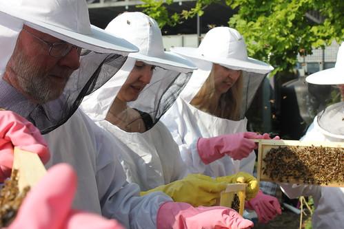 Bees etc 027