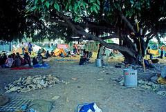 Antiwar Encampment at Flamingo Park: 1972