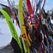 Ski bouquet