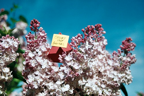 Occupy the lilacs