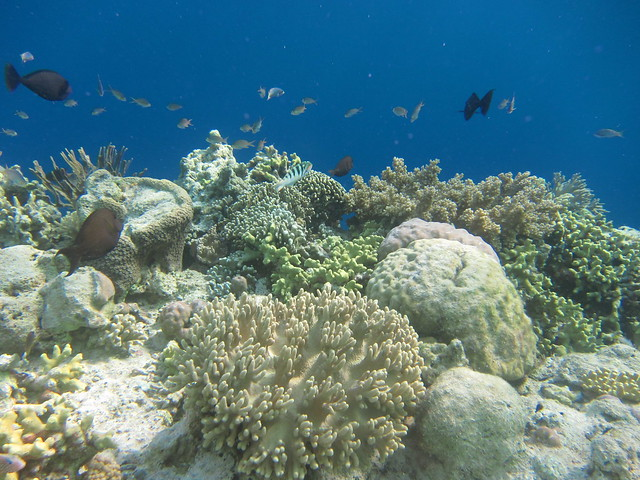 Wakatobi: Colours of the Reef (1/6)