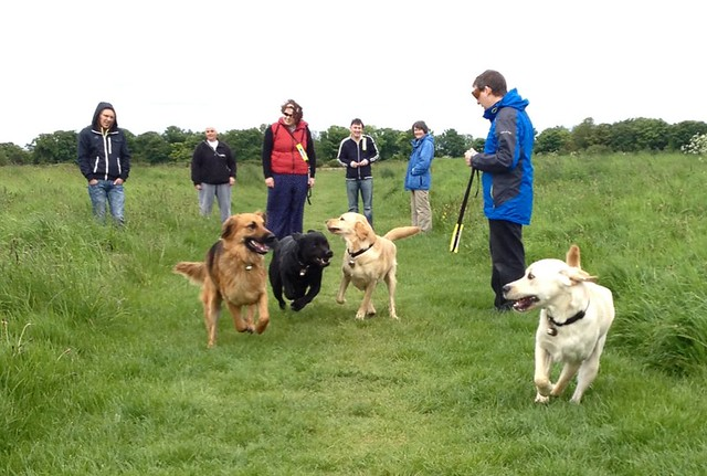 6 adults with 4 guide dogs just let of their leads and running towards the camera