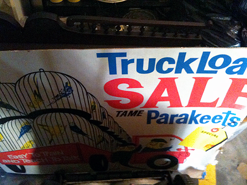 Truckload Sale Tame Parakeets