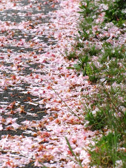 Scaterred Petals