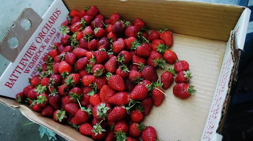 Strawberry Picking 2012