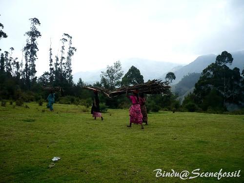 1.Women, forest, firewood, Kodaikanal