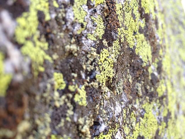 Mossy boulder