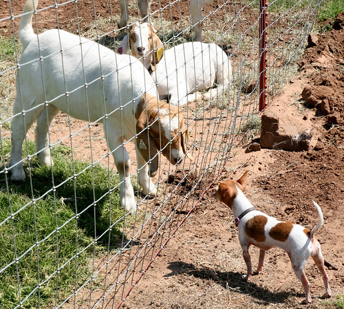 Getting to know our new neighbors in our Kiowa campground