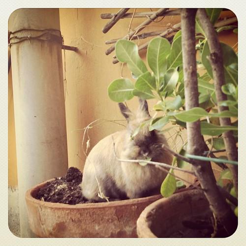 Coniglio mangia fiori