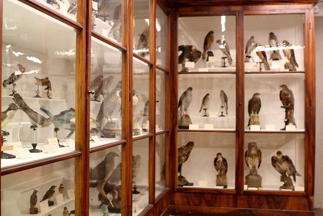 Bird bird birds