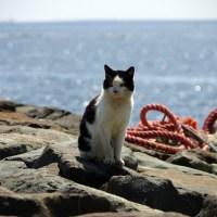 【Photo】城南島海浜公園でねこを撮る。【城南島海浜公園】